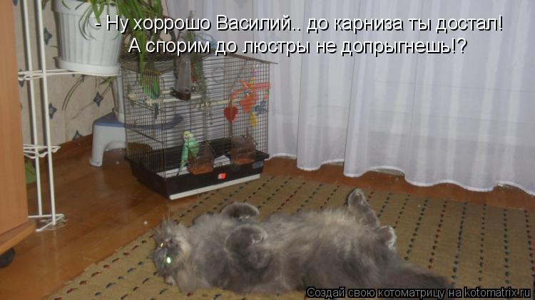 Котоматрица: - Ну хоррошо Василий.. до карниза ты достал! А спорим до люстры не допрыгнешь!?