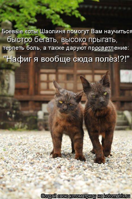 Котоматрица - Боевые коты Шаолиня помогут Вам научиться: быстро бегать, высоко прыга