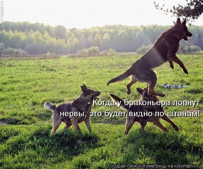 Котоматрица: - Когда у браконьера лопнут нервы, это будет видно по штанам!
