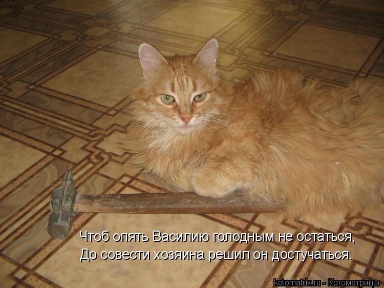 Котоматрица: Чтоб опять Василию голодным не остаться, До совести хозяина решил он достучаться.