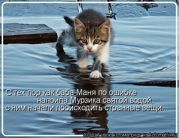 Котоматрица: С тех пор как баба Маня по ошибке напоила Мурзика святой водой,  с ним начали происходить странные вещи...