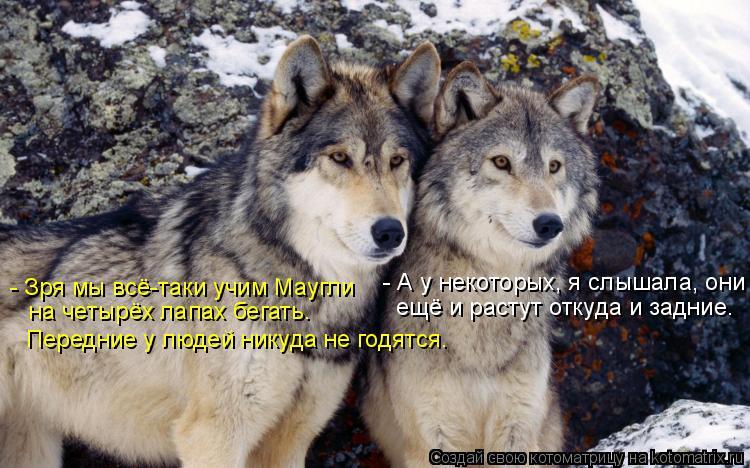 Котоматрица: - Зря мы всё-таки учим Маугли  на четырёх лапах бегать. Передние у людей никуда не годятся. - А у некоторых, я слышала, они ещё и растут откуда и