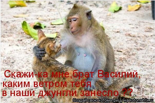 Котоматрица: Скажи-ка мне,брат Василий,  каким ветром тебя  в наши джунгли занесло ??