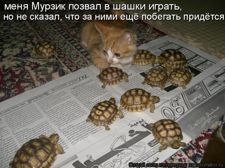 Котоматрица: меня Мурзик позвал в шашки играть,  но не сказал, что за ними ещё побегать придётся