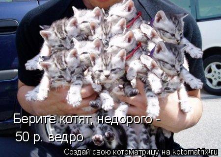 Котоматрица: Берите котят, недорого - 50 р. ведро