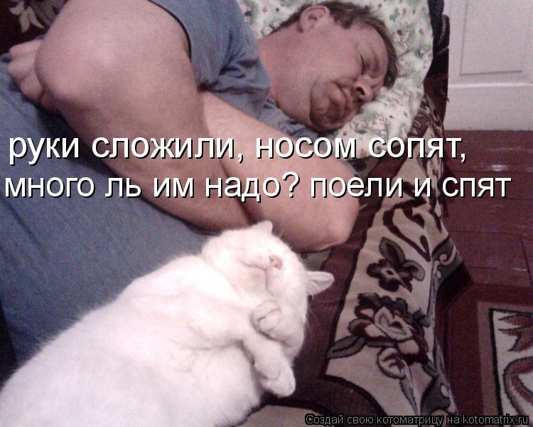 Котоматрица: руки сложили, носом сопят, много ль им надо? поели и спят