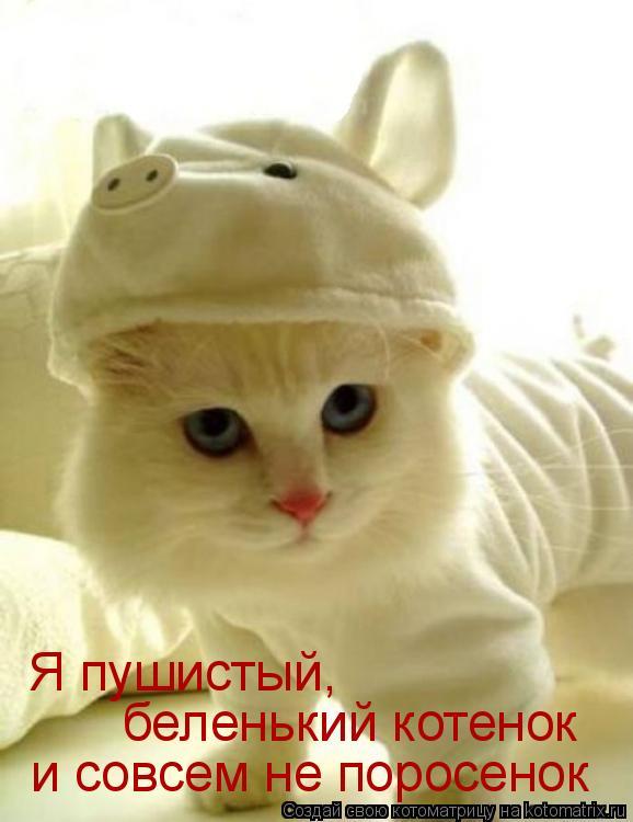 Котоматрица: и совсем не поросенок беленький котенок Я пушистый,