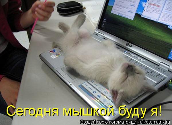 Котоматрица: Сегодня мышкой буду я!