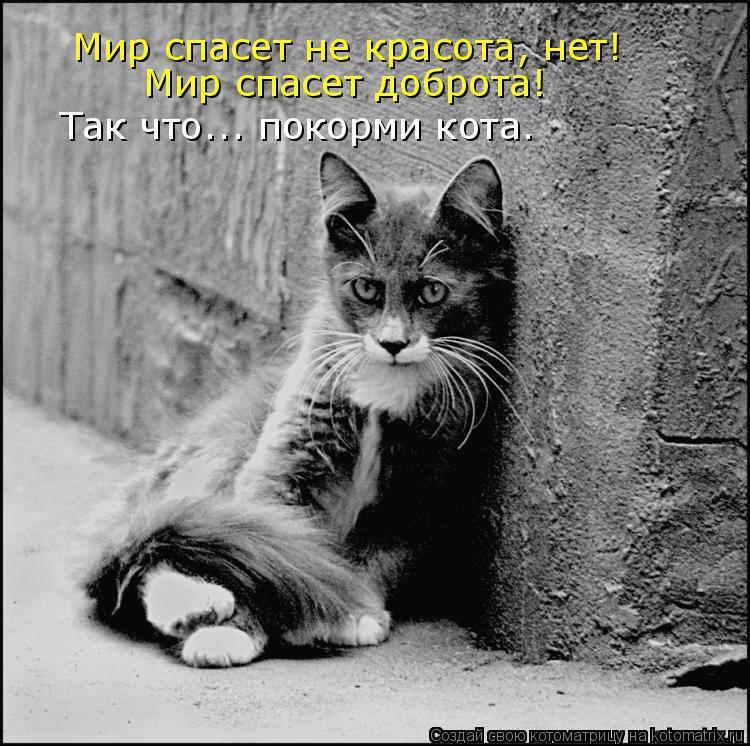 Котоматрица: Мир спасет не красота, нет!  Мир спасет доброта! Так что... покорми кота.