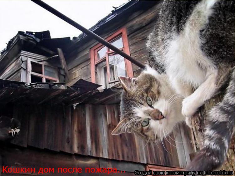 Котоматрица: Кошкин дом после пожара...