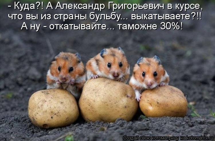 Котоматриця!)))) - Страница 6 931450