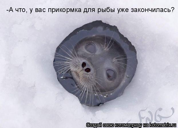 Котоматрица: -А что, у вас прикормка для рыбы уже закончилась?