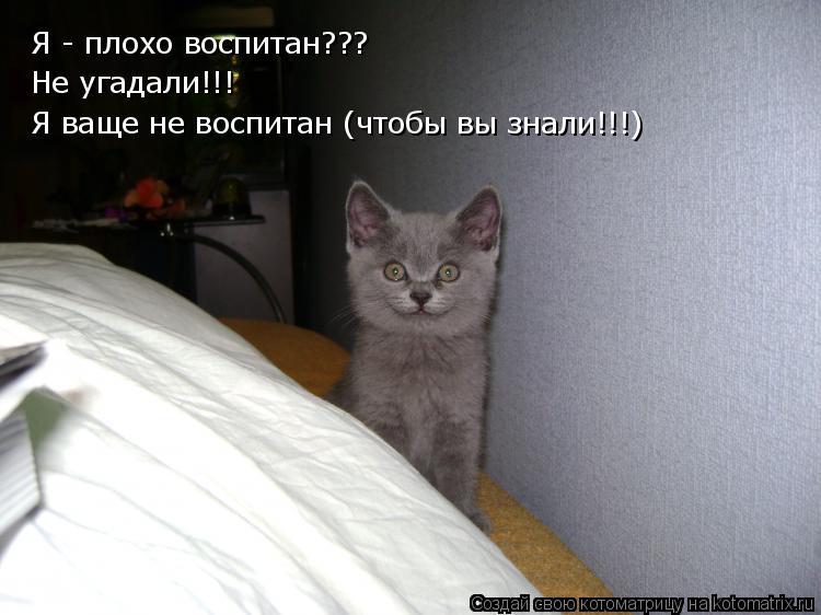 Котоматриця!)))) - Страница 7 931620