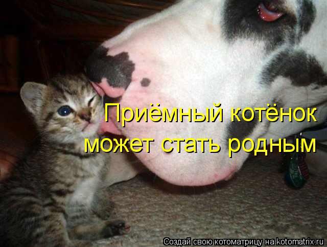 Котоматрица: Приемный котенок  может стать родным .. ..