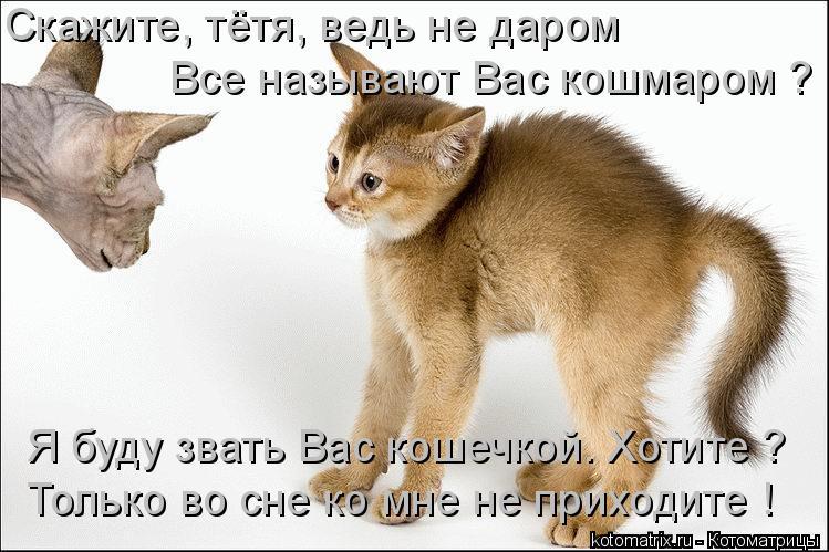 Котоматрица: Скажите, тётя, ведь не даром Все называют Вас кошмаром ? Я буду звать Вас кошечкой. Хотите ? Только во сне ко мне не приходите !