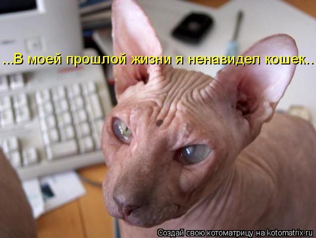 Котоматрица: ...В моей прошлой жизни я ненавидел кошек...