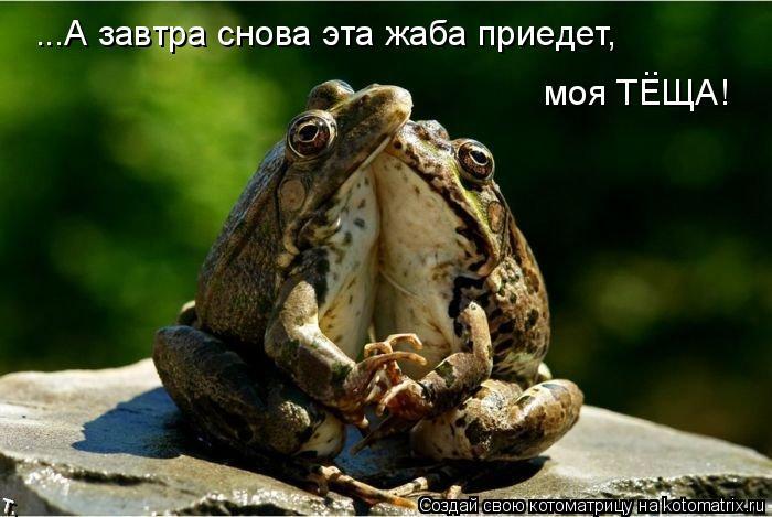 Котоматрица: ...А завтра снова эта жаба приедет, моя ТЕЩА! ..