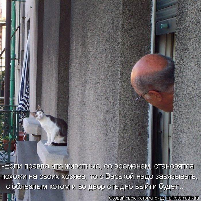 Котоматрица: -Если правда что животные, со временем, становятся похожи на своих хозяев, то с Васькой надо завязывать, с облезлым котом и во двор стыдно вы
