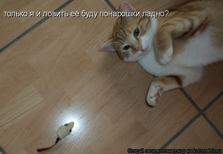 музыка кошка ловит мышку