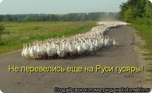 Котоматрица: Не перевелись еще на Руси гусяры!
