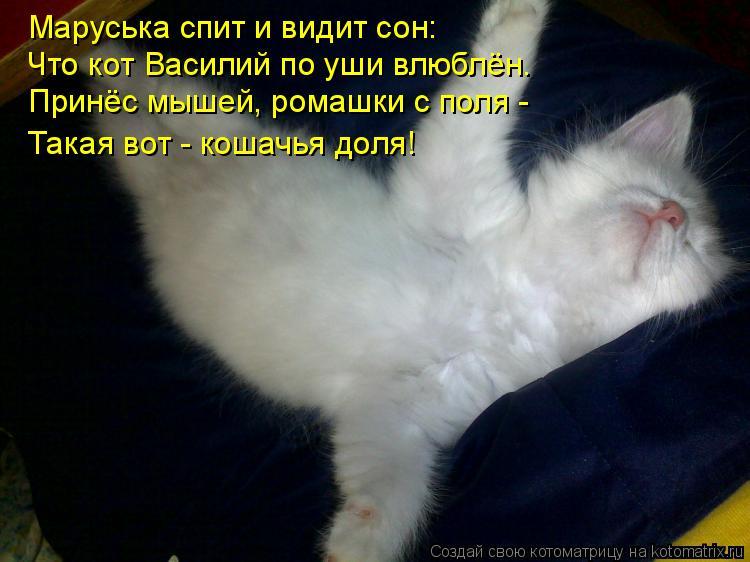 Котоматрица: Маруська спит и видит сон: Что кот Василий по уши влюблён. Принёс мышей, ромашки с поля - Такая вот - кошачья доля!