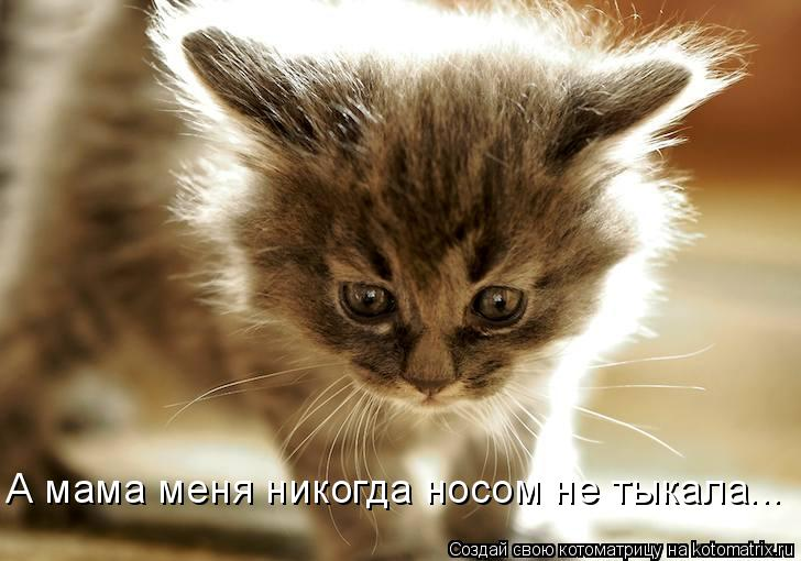 http://kotomatrix.ru/images/lolz/2011/06/17/932552.jpg