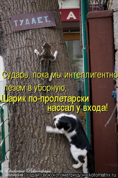 http://kotomatrix.ru/images/lolz/2011/06/18/932570.jpg