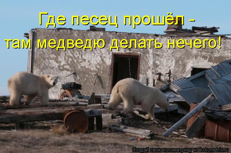 Котоматрица - там медведю делать нечего! Где песец прошёл -
