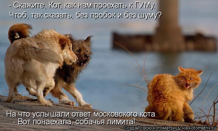 Котоматрица - - Скажите, Кот, как нам проехать к ГУМу, Чтоб, так сказать, без пробок