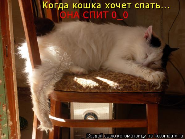 очень кошка она хочет спать слова фитнес-центры: список