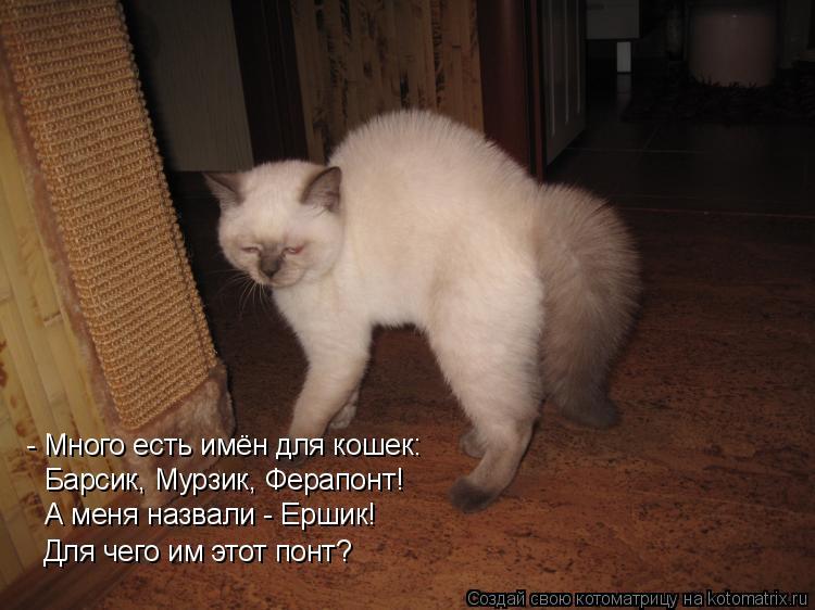 Котоматрица: - Много есть имён для кошек: Барсик, Мурзик, Ферапонт! А меня назвали - Ершик! Для чего им этот понт?