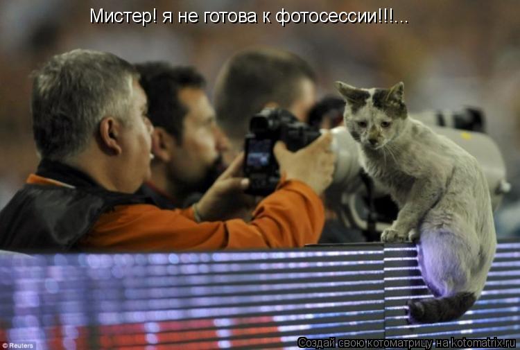 Котоматрица: Мистер! я не готова к фотосессии!!!...