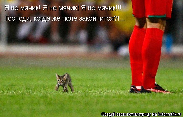 Котоматрица: Я не мячик! Я не мячик! Я не мячик!!! Господи, когда же поле закончится?!...