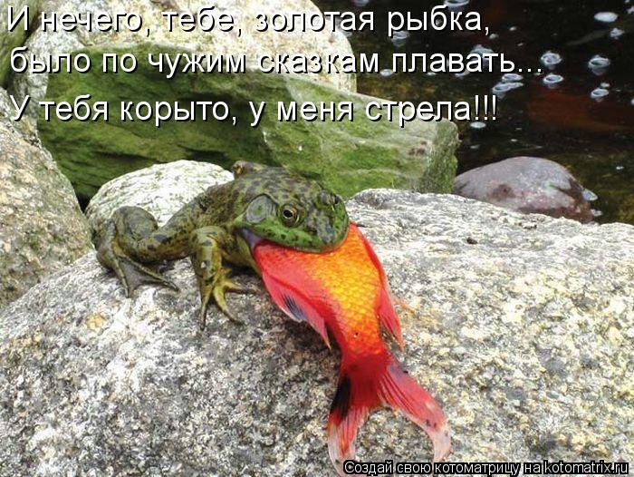 Котоматрица: И нечего, тебе, золотая рыбка,  было по чужим сказкам плавать... У тебя корыто, у меня стрела!!!