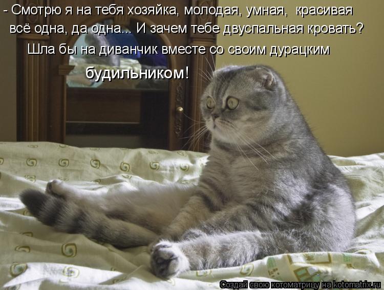 Котоматрица: всё одна, да одна... И зачем тебе двуспальная кровать? - Смотрю я на тебя хозяйка, молодая, умная,  красивая   Шла бы на диванчик вместе со своим