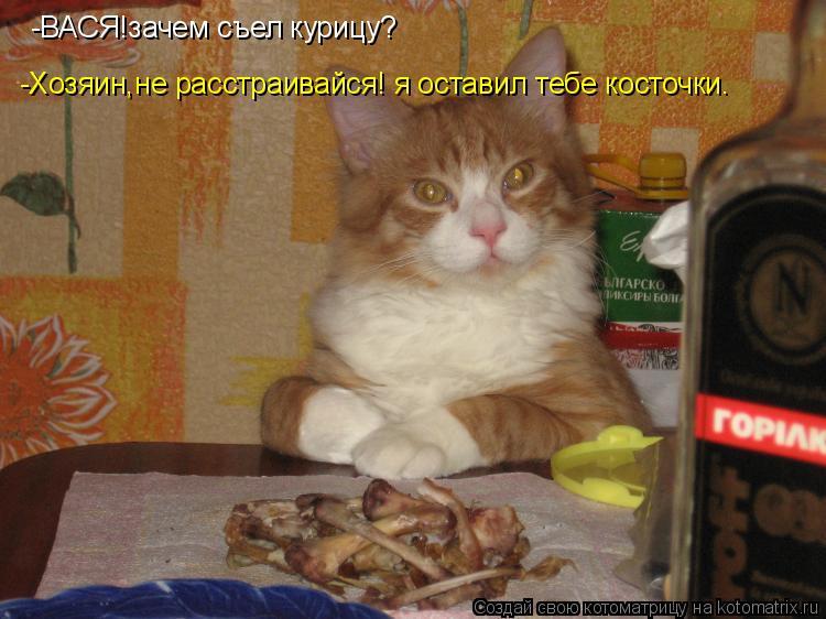 Котоматрица: -ВАСЯ!зачем съел курицу? -Хозяин,не расстраивайся! я оставил тебе косточки.