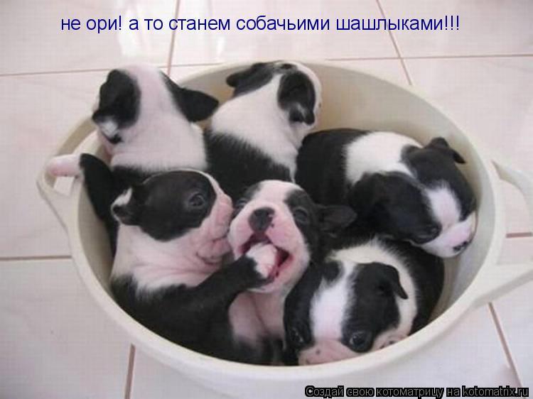 Котоматрица: не ори! а то станем собачьими шашлыками!!!