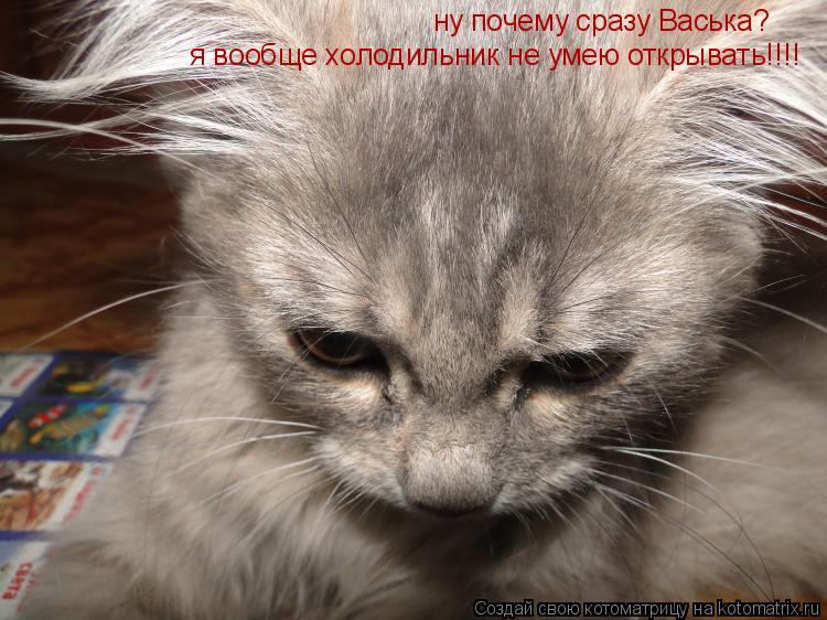 Котоматрица: ну почему сразу Васька? я вообще холодильник не умею открывать!!!!