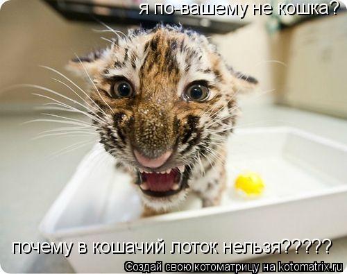 Котоматрица: я по-вашему не кошка? почему в кошачий лоток нельзя?????