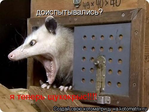 Котоматрица: доиспытывались? я теперь щукокрыс!!!!