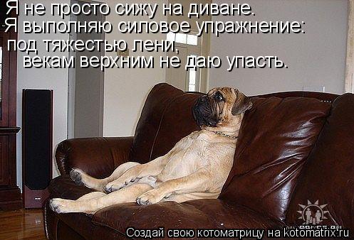 Котоматрица: Я не просто сижу на диване. Я выполняю силовое упражнение: под тяжестью лени,  векам верхним не даю упасть.