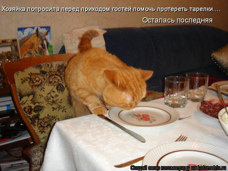 Котоматрица - Хозяйка попросила перед приходом гостей помочь протереть тарелки.... О