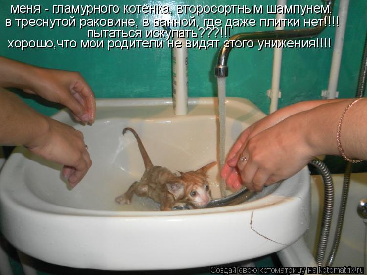 Котоматрица: меня - гламурного котёнка, второсортным шампунем,  в треснутой раковине, в ванной, где даже плитки нет!!!! в треснутой раковине, в ванной, где д