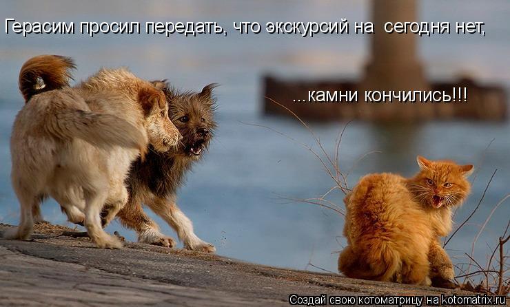 Котоматрица: Герасим просил передать, что экскурсий на  сегодня нет, ...камни кончились!!!