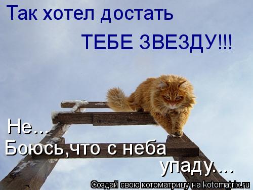 Котоматрица: Так хотел достать ТЕБЕ ЗВЕЗДУ!!! Не... Боюсь,что с неба упаду....