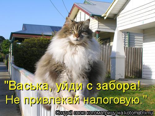"""Котоматрица: """"Васька, уйди с забора! Не привлекай налоговую."""""""
