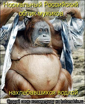 Котоматрица: Нормальный Российский  облик мужиков  нахлебавшихся водкой.