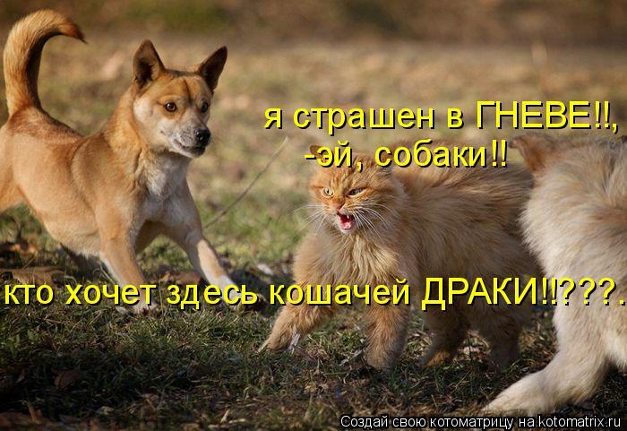 Котоматрица: я страшен в ГНЕВЕ!!, -эй, собаки!! кто хочет здесь кошачей ДРАКИ!!???..