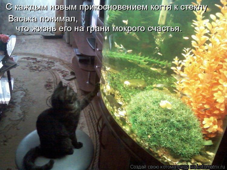 Котоматрица: С каждым новым прикосновением когтя к стеклу Васька понимал,  что жизнь его на грани мокрого счастья…
