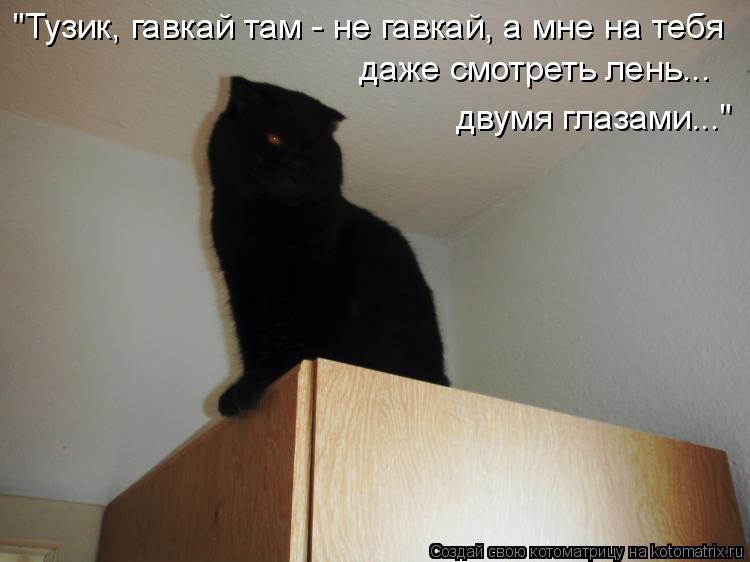"""Котоматрица - """"Тузик, гавкай там - не гавкай, а мне на тебя  даже смотреть лень... д"""